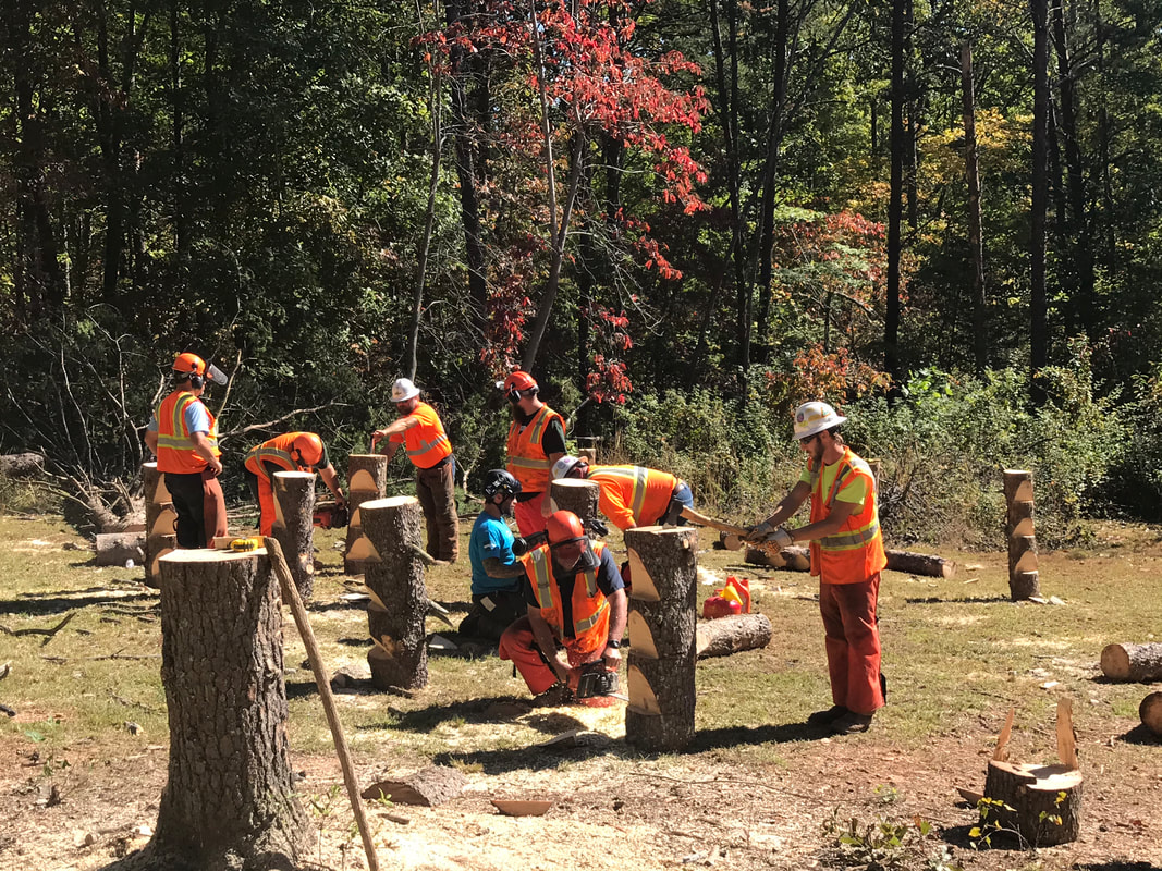ArborMaster L1 Precision Tree Felling, Chainsaw Safety & Handling course